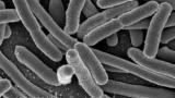 Дисиміляція в біології - це приклад катаболізму в харчових ланцюгах